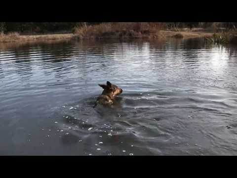 Best Pond Aeration , Hornwort weeds , Dog Swimming | Missouri Wind and Solar