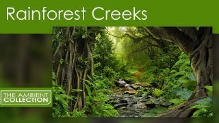 Nature DVD - Rainforest Creeks - Rainforest Scenes With Natural Sounds
