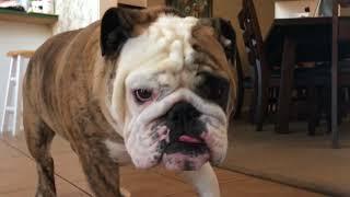 Reuben the Bulldog: Cleanup On Aisle 5