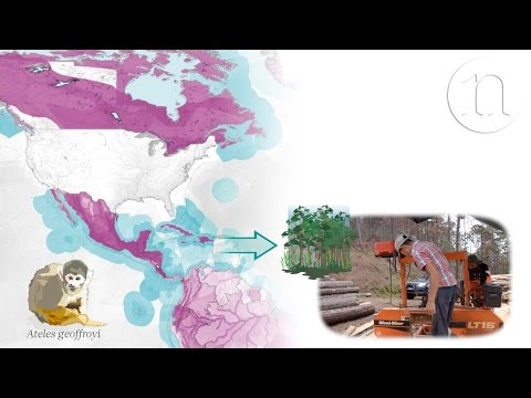 The trade routes that threaten biodiversity