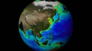 Global Plankton Blooms