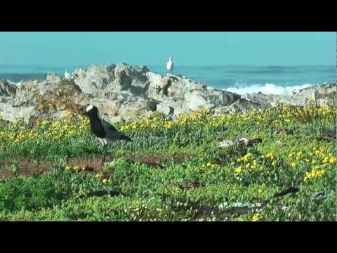 Gansbaai South Africa – A scenic tour