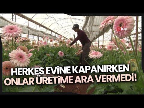 Kısıtlamadan Muaf Tutulan Üreticiler Türkiye'nin Sebze Meyve İhtiyacı İçin Çalışıyor