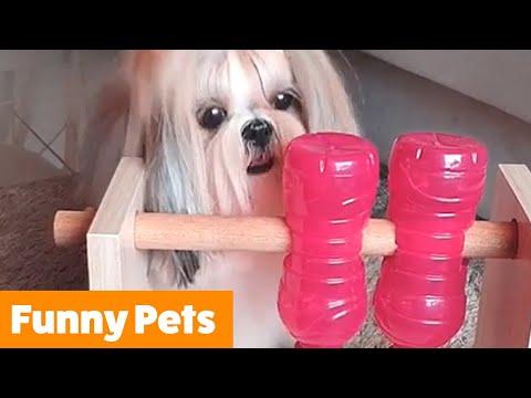 Funniest Cute Pets   Funny Pet Videos