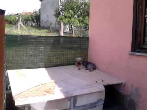 Satılık Yavru Köpekler,Yavru Köpek İlanları,Yavru Köpek Fiyatları  www.minikkopekler.com