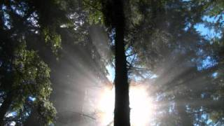 Svenson & Gielen-Sunlight Theory