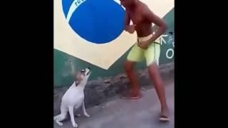 Cachorro Dançando Teclado Lindinho 2009 Remix