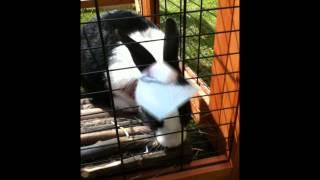 Heidi Bunny intro