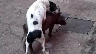 (D.J.)-211°-Cachorro, comendo à porca.