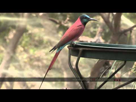 Southern Africa Birds and other countries  – South Africa Travel Channel 24