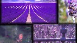 Lavender's Blue - English folk song, harmony