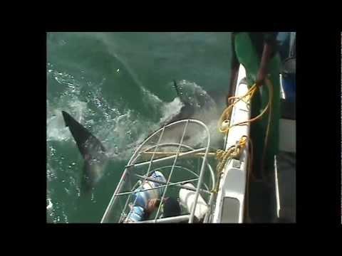 Sharkdiving at Gansbaai, South Africa