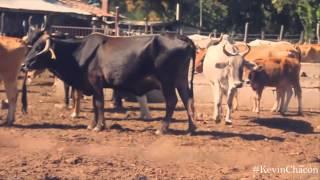 Muchacho de rancho - Héctor Peña (Estudio 2015)
