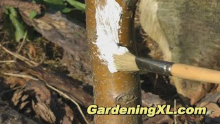 Whitewashing a Tree Trunk / Whitening Trees / Paint Tree White