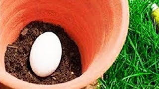 Bury An Egg In Your Garden Soil, What Happens Few Days Later Will Surprise You