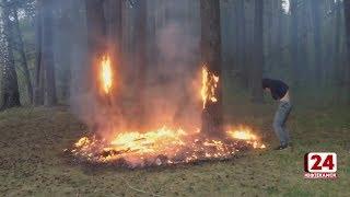 Из-за беспечности людей горит трава и лес