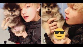 BTS V Update His Puppy Yeontan