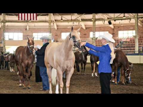 2016 WCHA Breeders Halter Futurity