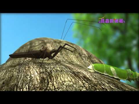 《昆蟲捉迷藏》隨身攜帶吸管的刺客【吸管部隊:蝽象】 - YouTube