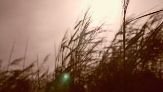 Dame - Traumreise [Urlaubsvideo]