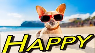 Upbeat Fun Ukulele Background Music