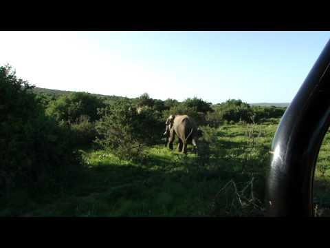 Hlosi elephants encounter : A great moment of silence !