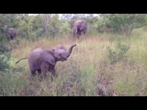 Baby Elephant Fun on Safari at Sabi Sands