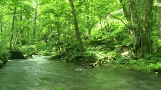 Nature Sounds Green Stream