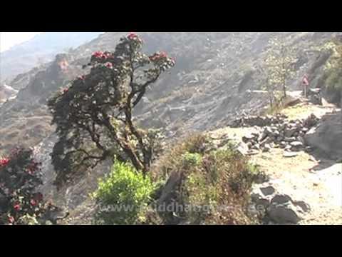 Nepal Trekking Langtang – Gosainkunda 1st day