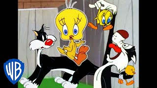 Looney Tunes | I Taut I Taw a Putty Tat! | Classic Cartoon Compilation | WB Kids