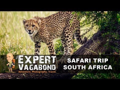 South African Safari: Phinda