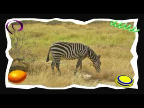 Safari in Kenya con Zucchero.avi