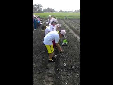 花蓮縣中正國小403~小小農夫農場體驗~種玉米 - YouTube