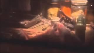 American Horror Story ft Harry Styles