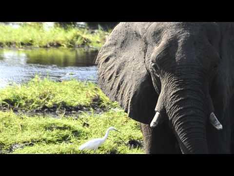 Путешествие по Африке – Русские Экспедиции