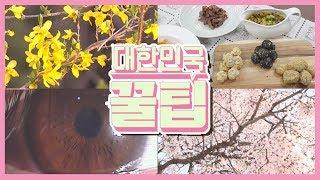 [대한민국 꿀팁] 2020년 4월 20일 다시보기
