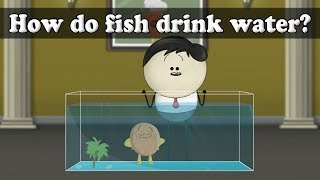 Osmosis - How do fish drink water?