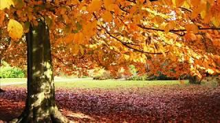 Outono - Musica Relaxamento & Meditação