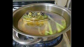 O sapo da panela quente.