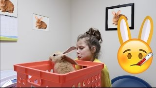 Sick Bunnies Go to the Vet! 🤒 (WK 325.3) | Bratayley