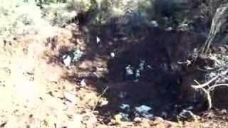 A história da carochinha de Ariques