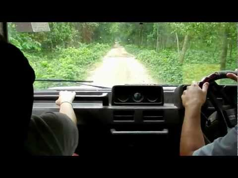 Driving through young forests near Dinajpur Bangladesh