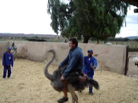 Riding an Ostrich in South Africa