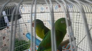 Niko  y Kimi  cantando 🎤🎵🎶