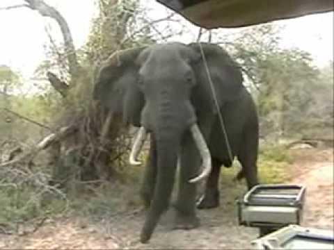 South Africa Safari and Tour Sample Video