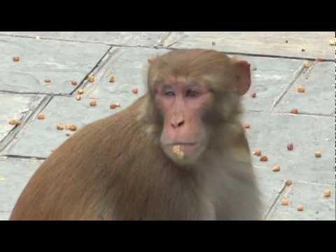 Kathmandu: 365 Steps up to ' The Monkey Temple '  Swayambhuath, Kathmandu, Nepal. Sept 2012