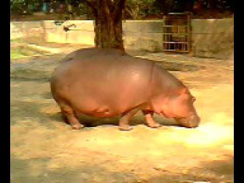 mirpur zoo (Bangladesh. Dhaka).avi