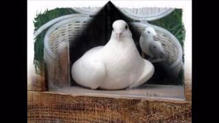 Славка Калчева - Бели Гълъби (HD)