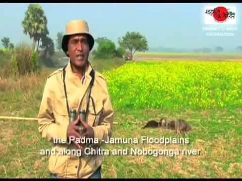Travel Bangladesh   Discover Nature and Life 2A   travelbangladesh net