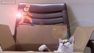 Naruto Vs Funny Cat ....(Naruto Parody : Sprite Animation Howwzzat???) ナルト